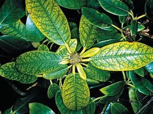 Stickstoffmangel Bei Pflanzen : neudorff d ngung ~ Lizthompson.info Haus und Dekorationen