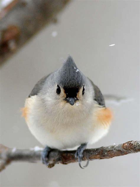 birds seek  backyard feeders  winter