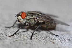 Fliegenplage Im Haus : fliegenplage auf der terrasse verhindern so geht 39 s ~ Eleganceandgraceweddings.com Haus und Dekorationen