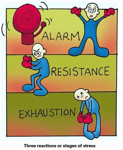 Alarm Stage Stress Adaptation Syndrome General Resistance