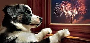 Why Dogs are Scared of Fireworks | Dog Tag Art