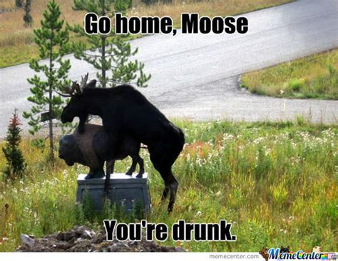 Canadian Moose Meme - mooses memes best collection of funny mooses pictures