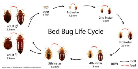 bed bug faq  guidelines ppldorg