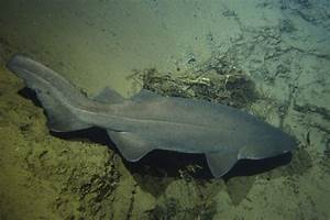 Photos & Images Cocos Malpelo Island DeepSee