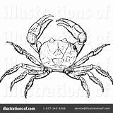 Crab Clipart King Drawing Illustration Prawny Royalty Getdrawings Rf sketch template