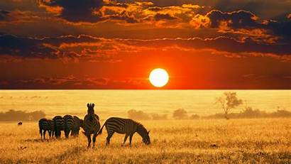 African Animals Safari Pixelstalk