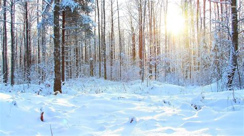 Background Images Snow by Snowy Forest Wallpapers Wallpaper Cave