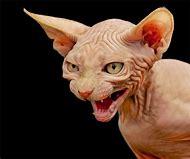 Halloween Scary Hairless Cats