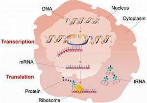 Explainer  What Are Genes