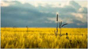 DRY GRASS FIELD LANDSCAPE HD WALLPAPER | 9HD Wallpapers