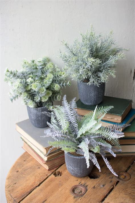 set of 3 fern succulents with round grey pots