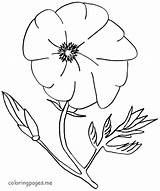 Poppy Coloring Flower Pages Flowers Printable Template Drawing Colouring Sheets Coloringhome Templates Getdrawings Library Clipart Popular sketch template