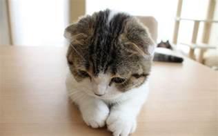 猫:猫の壁紙 | スマホ・PC用壁紙 WALLPAPER BOX