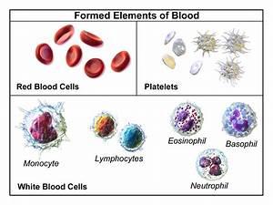 Blood Flashcards