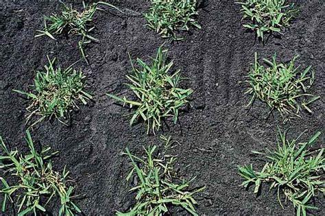 Warm-season Grasses