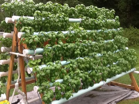 Facebook Aframe Nft Basil System  Hydroponic Gardening