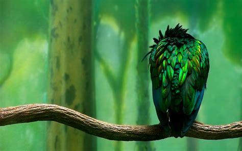 green bird hd desktop wallpapers  hd