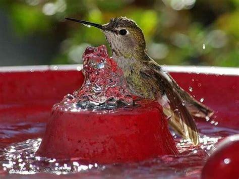 fill  yard  hummingbirds