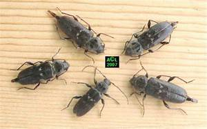 Insecte De Maison : insecte qui mange le bois boite a puzzle ~ Melissatoandfro.com Idées de Décoration