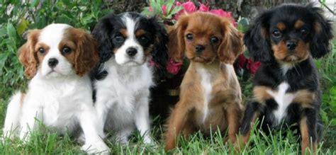 Cute Is Coming Beware Of Puppy Power Topeka Shawnee