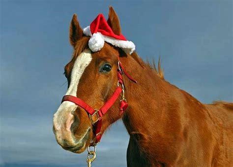 horses ready  christmas  original mane  tail