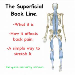 The Superficial Back Line (SBL) and Back Pain: A super ...  Superficial