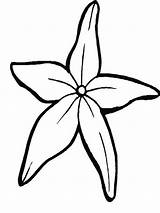 Starfish Coloring Drawing Clipart Fantastic Outline Drawings Cliparts Clip Library Flower sketch template