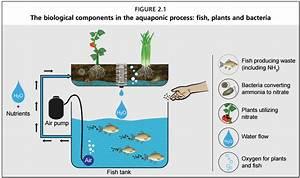 Small Scale Food Production In Aquaponics  U2013 Biological