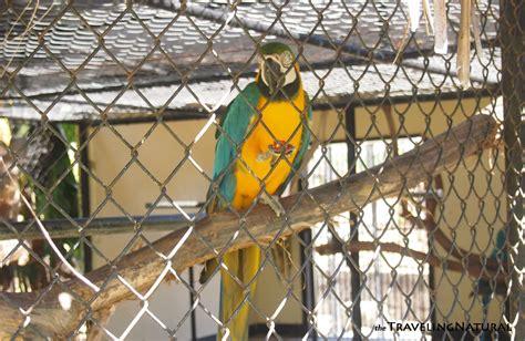 hope garden hope zoo port royal jamaica prt