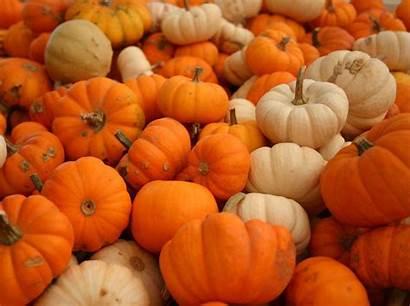 Pumpkin Wallpapers Pumpkins Autumn Nature