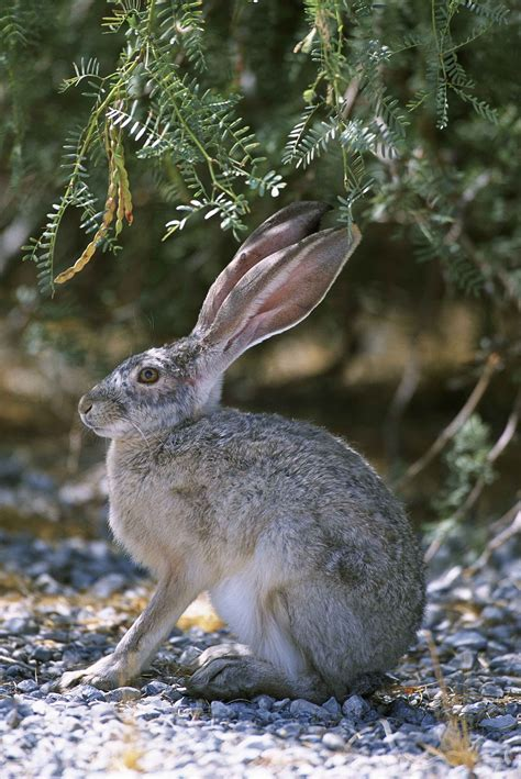 Hare  Wikipedia. Enterprise Ecommerce Development. Ssl Certificate Checker Makeup Classes Online. Companies That Use Enterprise Resource Planning. Cheap Internet Houston Web Designers Bay Area. Best Moving Companies Orange County. Dryer Cord Installation Studying For Cpa Exam. Business Loans For Bad Credit Start Up. Bus Companies New York Best Mpg Pick Up Truck
