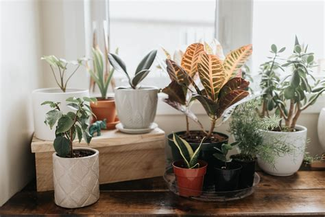 One Sentence Reminders Every Plant Parent Needs To Hear