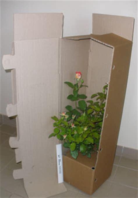 achat de rosiers en pots de 3 litres ou en pot de 5 litres conteneurs