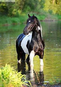 Black and white paint horse | Horses | Pinterest ...