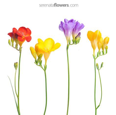 flowers pressing make your flowers last longer
