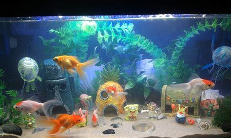 Spongebob Aquarium Decor Philippines by 10 Best Images About Spongebob Aquarium On