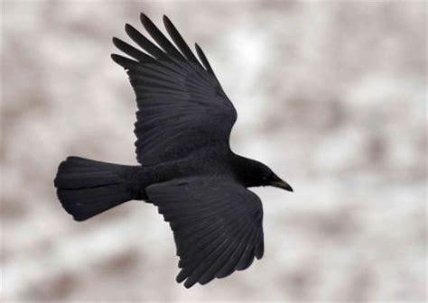 le corbeau bon week end