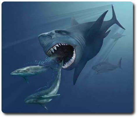 megalodon shark facts  stats   shark
