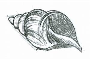 Best Photos of Sea Shell Drawing - Cartoon Sea Shell ...
