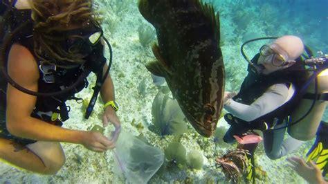 grouper lionfish eats