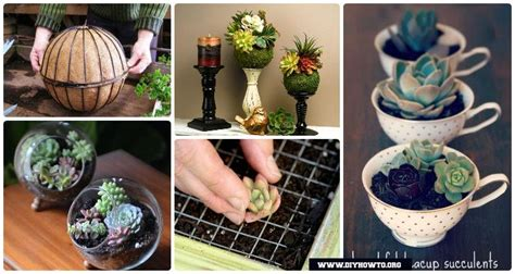 diy indoor outdoor succulent garden ideas projects