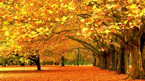Fall Backgrounds Yellow by Fall Nature Yellow Leaves Seasons Trees Wallpapers Hd