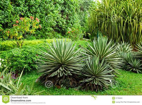 Dans Le Jardin by Plante Verte Dans Le Jardin Image Stock Image 37795691