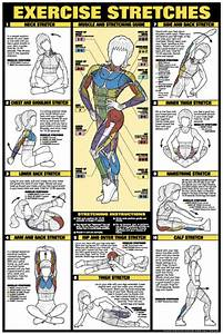 Exercise Stretches Poster - Laminated (Fitness Charts)