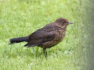 Singvögel Im Garten : lebensraum f r v gel ~ Whattoseeinmadrid.com Haus und Dekorationen