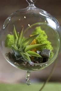 Pflanzen Wenig Licht : zimmerpflanzen die wenig licht brauchen ~ Markanthonyermac.com Haus und Dekorationen
