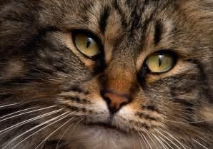 cat animal animal cat canvas