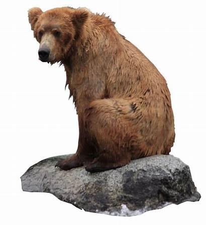 Bear Pngimg Immagini