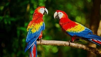 Parrot Macaw Scarlet Korean Orange Ara Last
