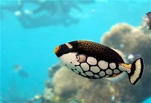 Welche Fische Passen Zusammen Aquarium : aquarium ~ Lizthompson.info Haus und Dekorationen